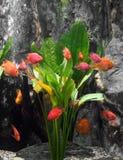 Poissons rouges Photo libre de droits