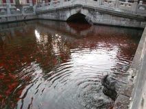 Poissons rouges dans l'étang Photographie stock