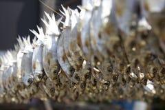 Poissons séchés au soleil Photo libre de droits