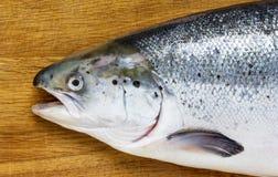 Poissons saumonés Images libres de droits