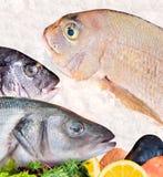 Poissons, saumons et flétan des fruits de mer arrangement Images stock