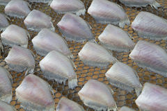 Poissons secs. Images stock