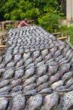 Poissons secs Photo stock