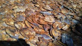 Poissons secs Image libre de droits