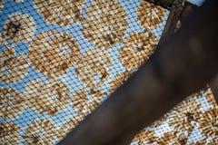 Poissons secs 12 Photographie stock libre de droits