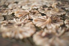 Poissons secs 20 Images libres de droits