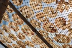 Poissons secs 32 Photographie stock libre de droits