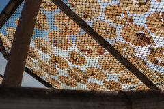 Poissons secs 37 Photographie stock