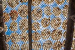 Poissons secs Photographie stock libre de droits
