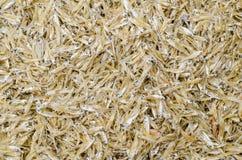 Poissons secs d'anchois photographie stock