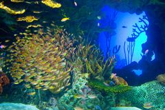 Poissons sous-marins Photographie stock