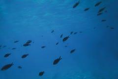Poissons sous-marins Photos stock