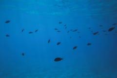 Poissons sous-marins Images libres de droits