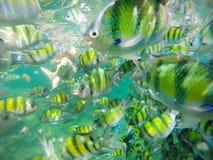Poissons sous-marins la mer d'Andaman Photo stock