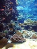 Poissons sur Coral Reef Photographie stock libre de droits