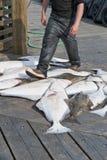 Poissons sur le dock photo stock