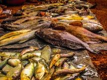 poissons sur un marché image libre de droits