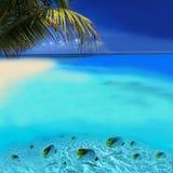 Poissons tropicaux Images libres de droits