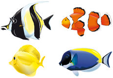 Poissons tropicaux Photos stock