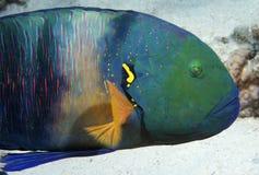 poissons tropicaux Photographie stock