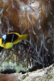 poissons tropicaux Images stock