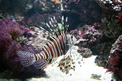 poissons tropicaux photographie stock libre de droits