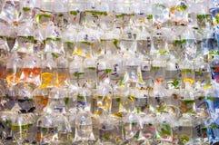 Poissons tropicaux accrochant dans des sachets en plastique au marché de poisson rouge de Mong Kok, Tung Choi Street, Hong Kong photographie stock libre de droits