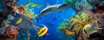 Poissons tropicaux d'Anthias avec les coraux nets du feu et requin Photos libres de droits