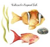 Poissons tropicaux d'aquarelle Le goldie peint à la main de mer et le Clownfish, algue, lapident d'isolement sur le fond blanc so illustration libre de droits