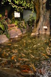 Poissons tropicaux sous le verre Image stock