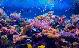 Poissons tropicaux sur un récif coralien