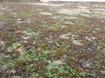 Poissons verts de nature de roche de plage Image stock