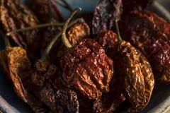 Poivre épicé chaud superbe de Bhut Jolokia de scorpion Photographie stock