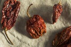 Poivre épicé chaud superbe de Bhut Jolokia de scorpion Photo stock
