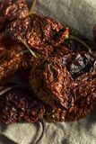 Poivre épicé chaud superbe de Bhut Jolokia de scorpion Images libres de droits