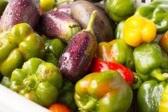 Poivre, aubergine Image stock