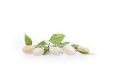 Poivre de piment blanc de Habanero Photographie stock libre de droits