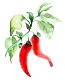 Poivre de piment d'un rouge ardent Photos libres de droits