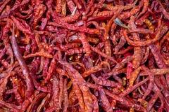 Poivre de piments sec entier rouge pur sur le marché de gens du pays de la Thaïlande Images libres de droits