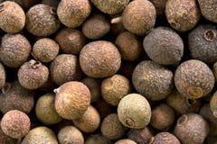 Poivre de poivre de Jamaïque (toute-épice) Images libres de droits