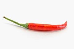 Poivre de /poivron d'un rouge ardent Image libre de droits