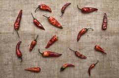 Poivre de /poivron rouge sec Image stock