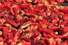 Poivre de /poivron rouge sec Image libre de droits