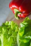 Poivre succulent avec de la salade Image stock