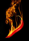 /poivron brûlant photos stock