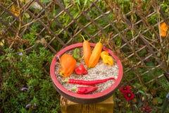 Poivron dans une tasse d'argile dans le jardin photographie stock