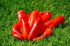 Poivron rouge chaud Photographie stock