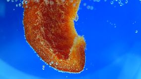 Poivron rouge dans l'eau clips vidéos