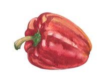 Poivron rouge doux d'aquarelle Image libre de droits