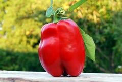 Poivron rouge frais Image libre de droits